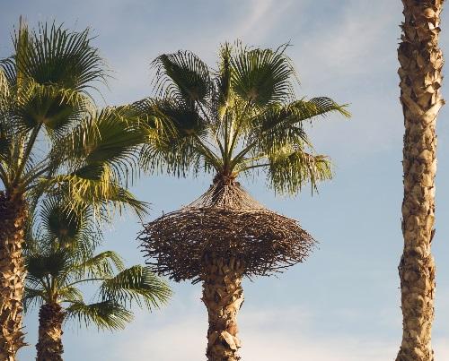 """Instalación """"Hanging Nest""""  (2016) en los jardines del Turia"""