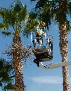 """El artista Bob Verschueren durante la creación de """"Hanging Nest"""""""